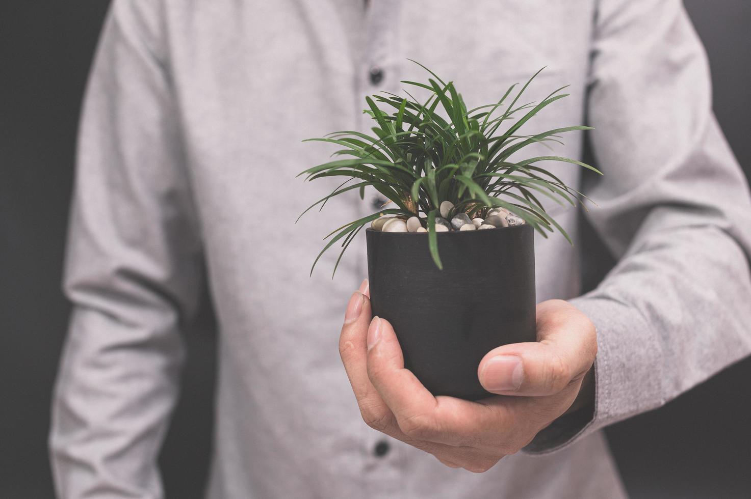 växtkruka i mänskliga händer älskar naturkoncept kärleksträd foto