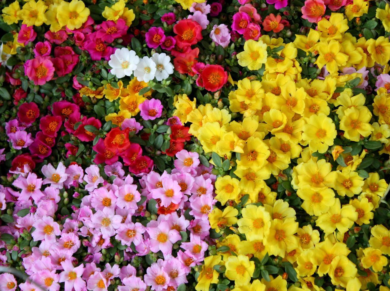 lite färgglada av hogweed foto