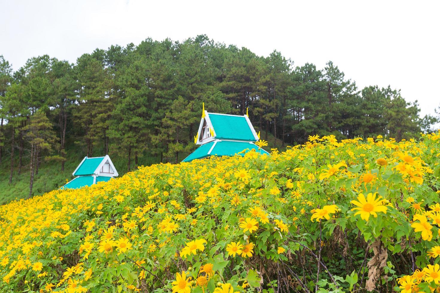gula blommor och hus i Thailand foto