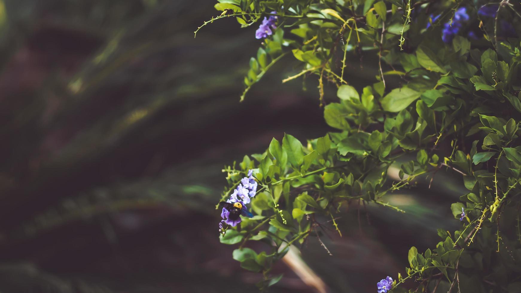 humla på en lila blomma foto