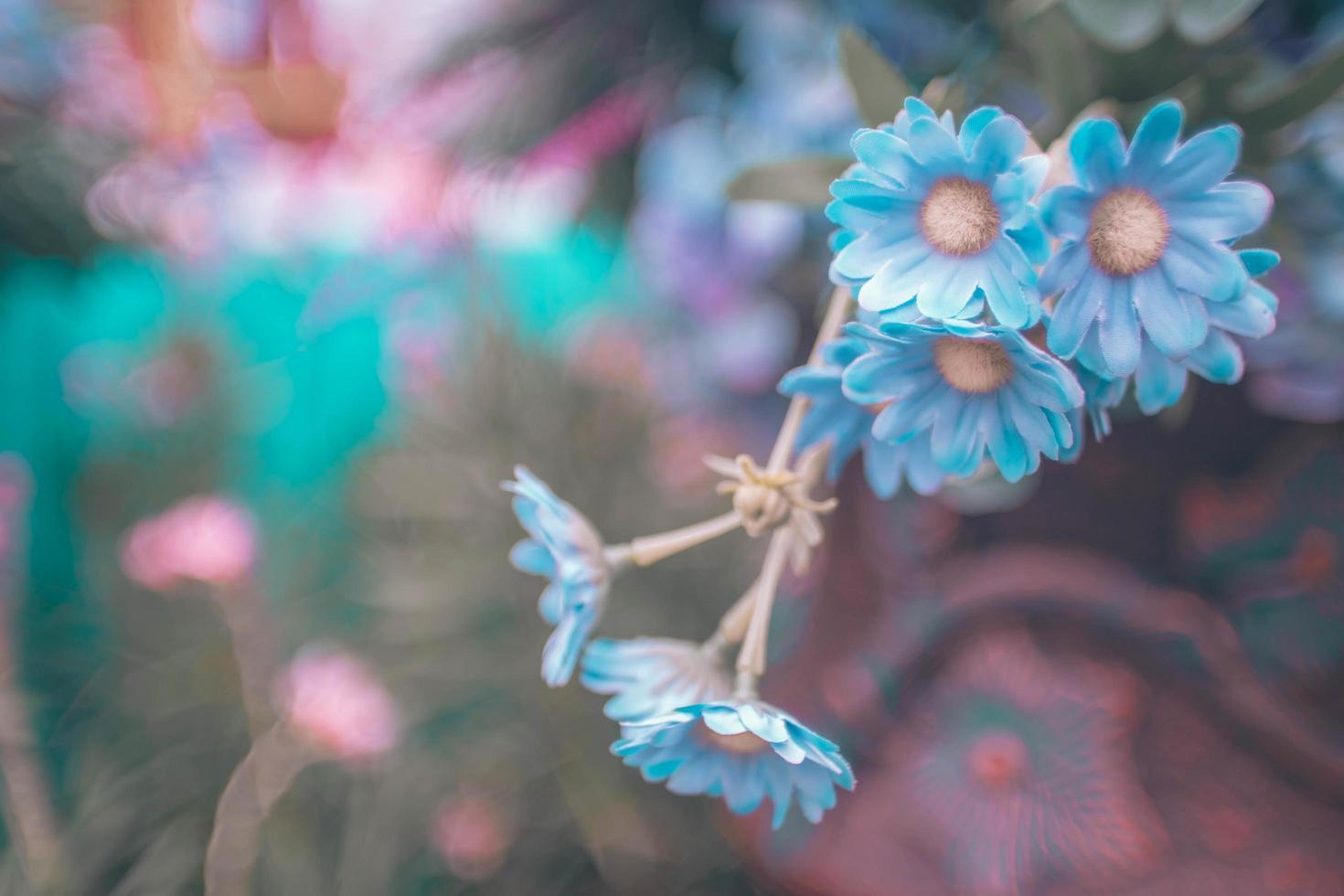blå körsbärsblommor foto