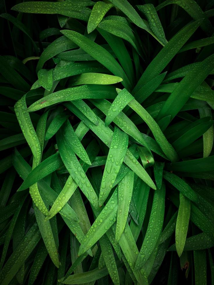 grönt gräs med dagg foto