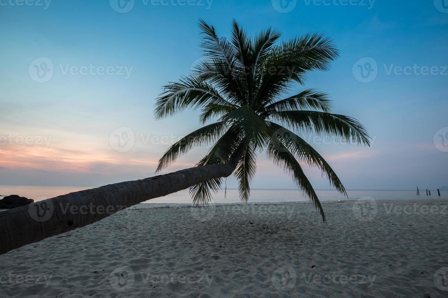 kokosnöt träd vid solnedgången foto