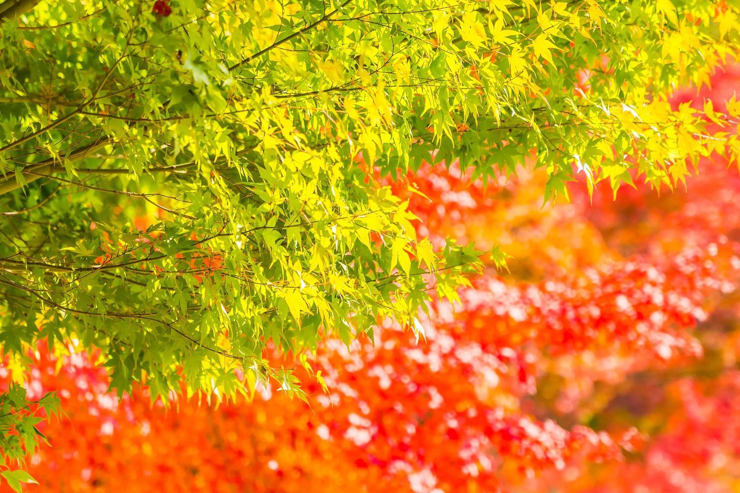 vackra gröna och röda lönnlöv foto