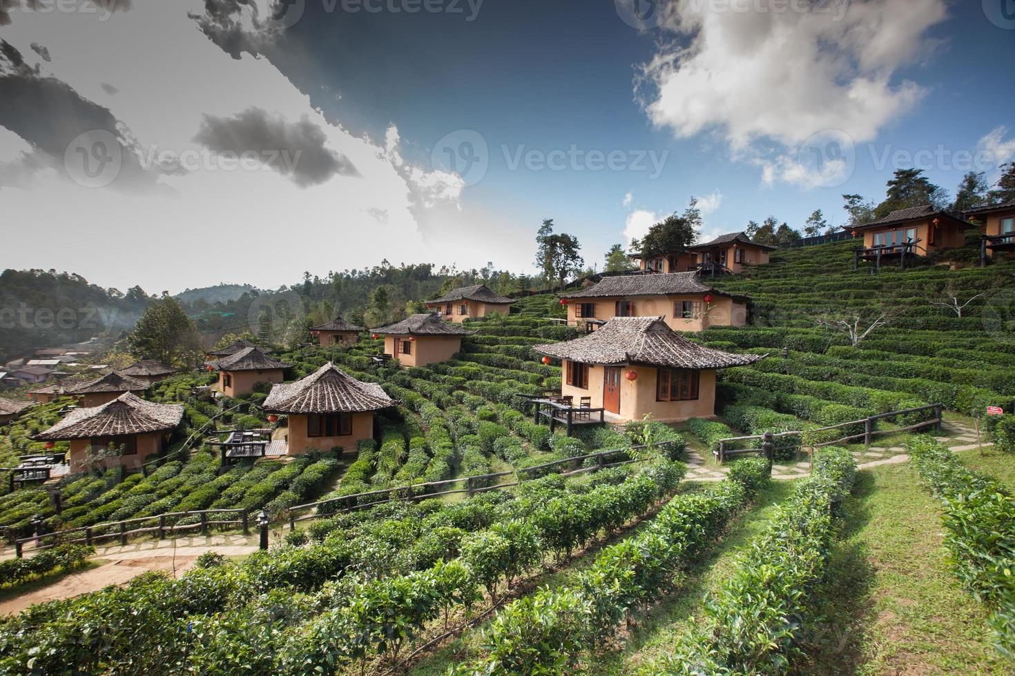 by och grönt te fält foto