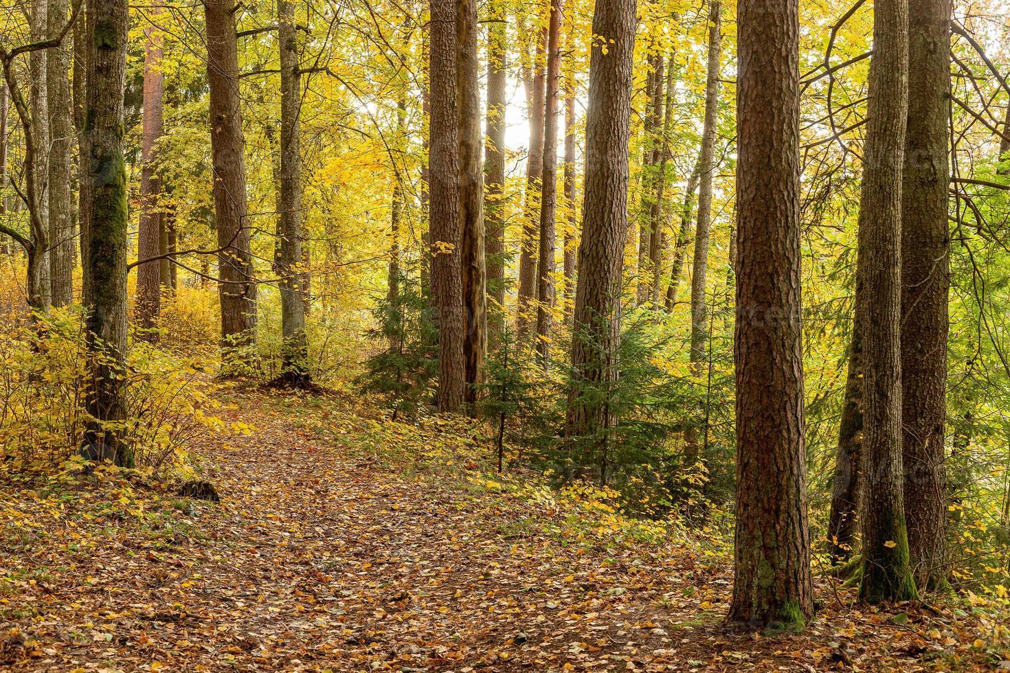 färgglada skogsstig på hösten med fallna löv foto