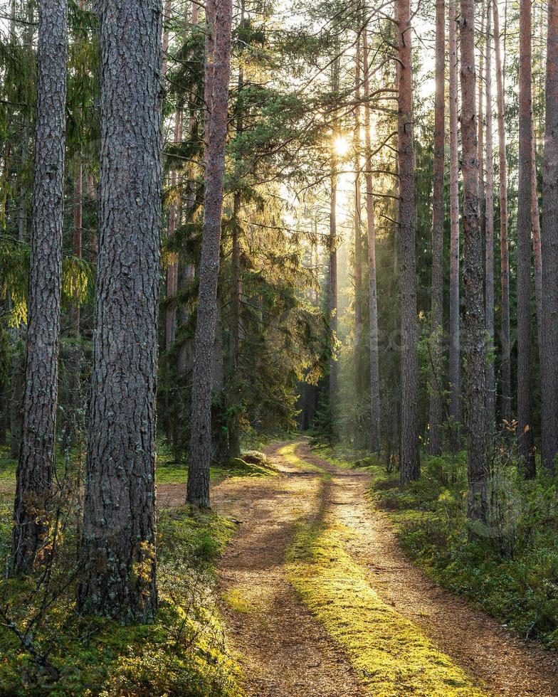 mossig väg i skogen på en solig hösteftermiddag foto