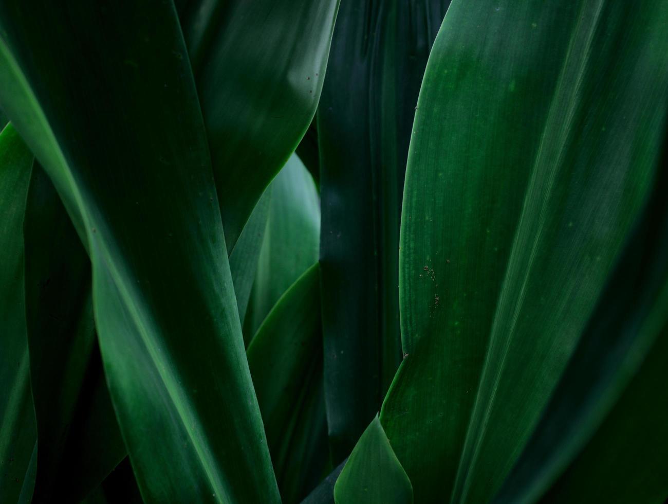 gröna blad naturliga abstrakt textur bakgrund foto