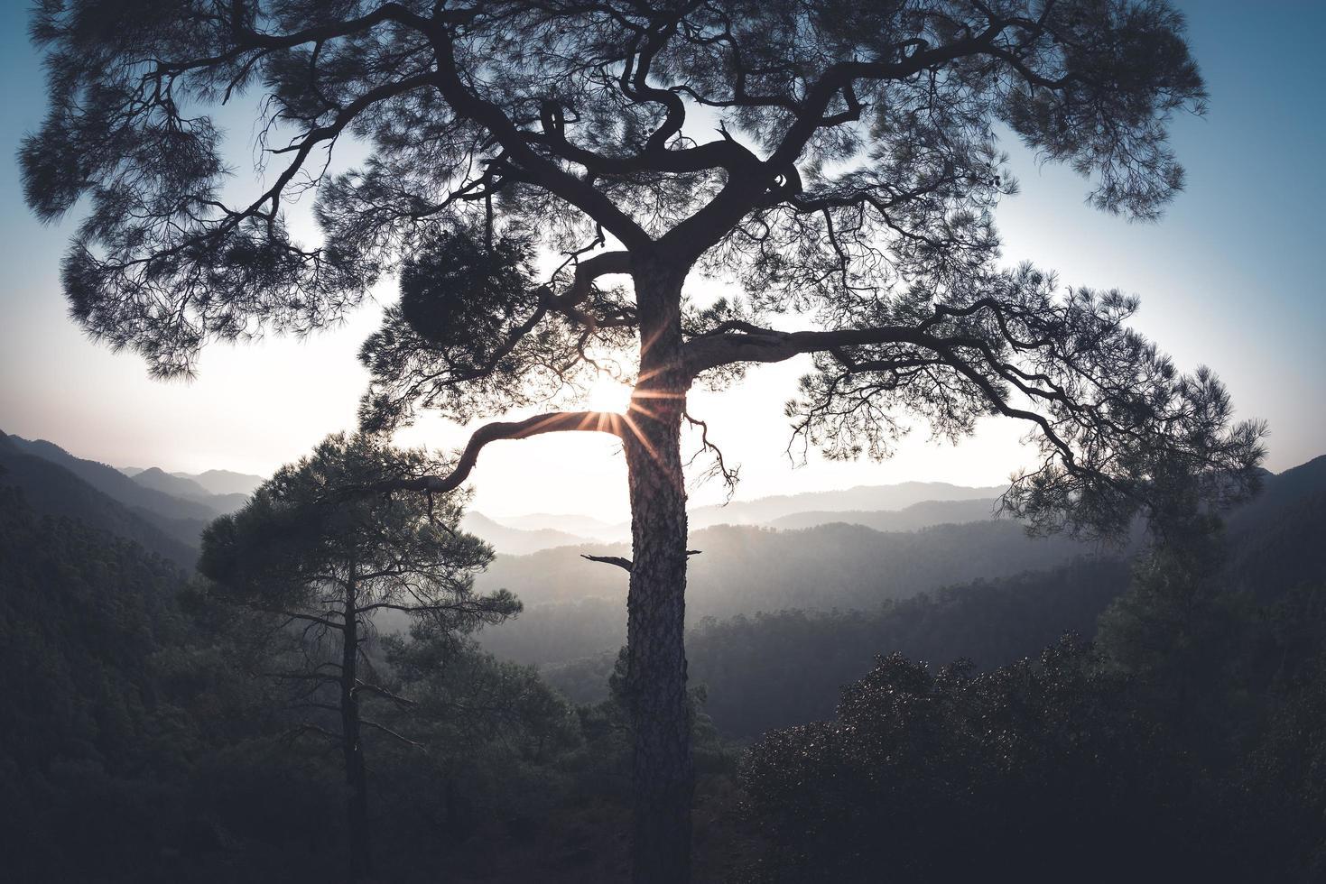 solen skiner genom trädet i troodosbergen i Cypern foto