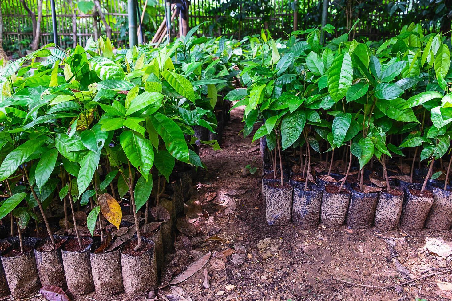 rader av krukväxter i en trädgård foto