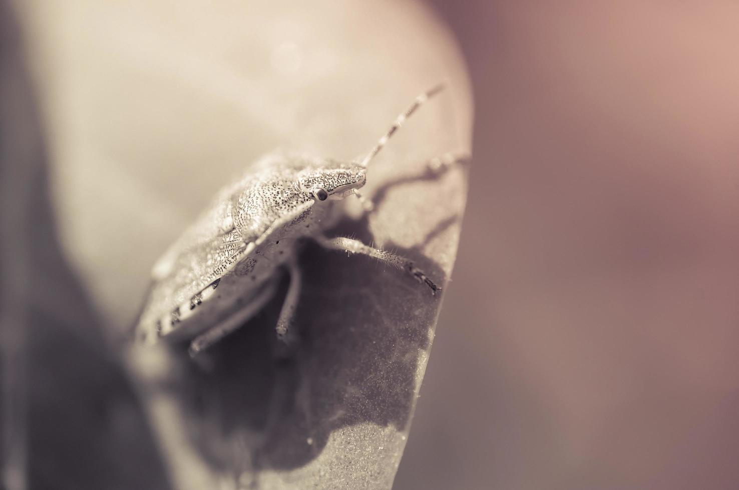 sköld bug på ett blad foto