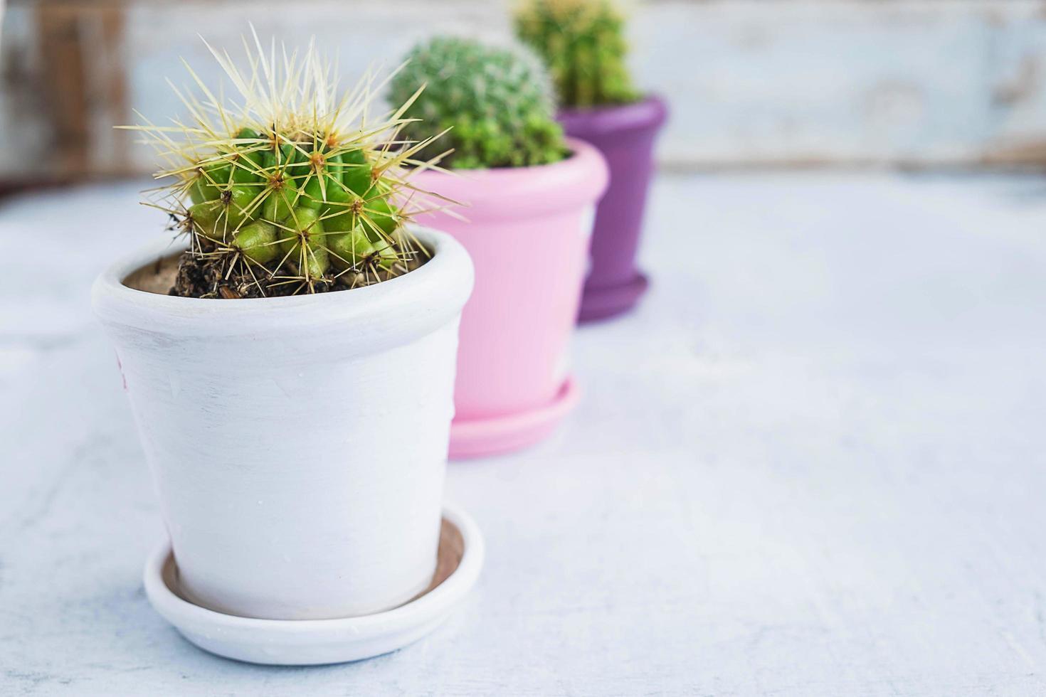 tre kaktusväxter i krukor på ett träbord foto