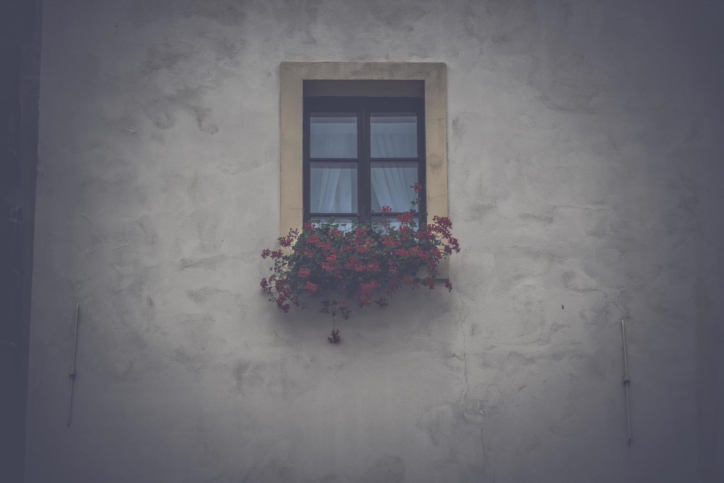 fönster med blommor i låda foto