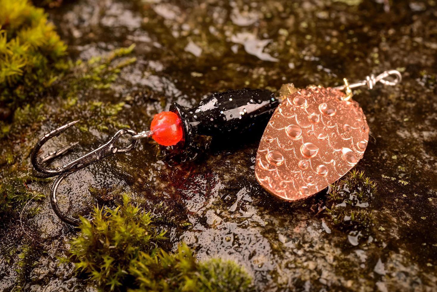 fiskesked lock på våt sten med mossa foto