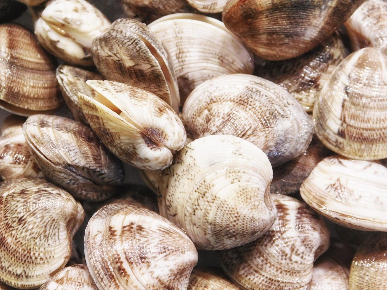 hög med musslor foto