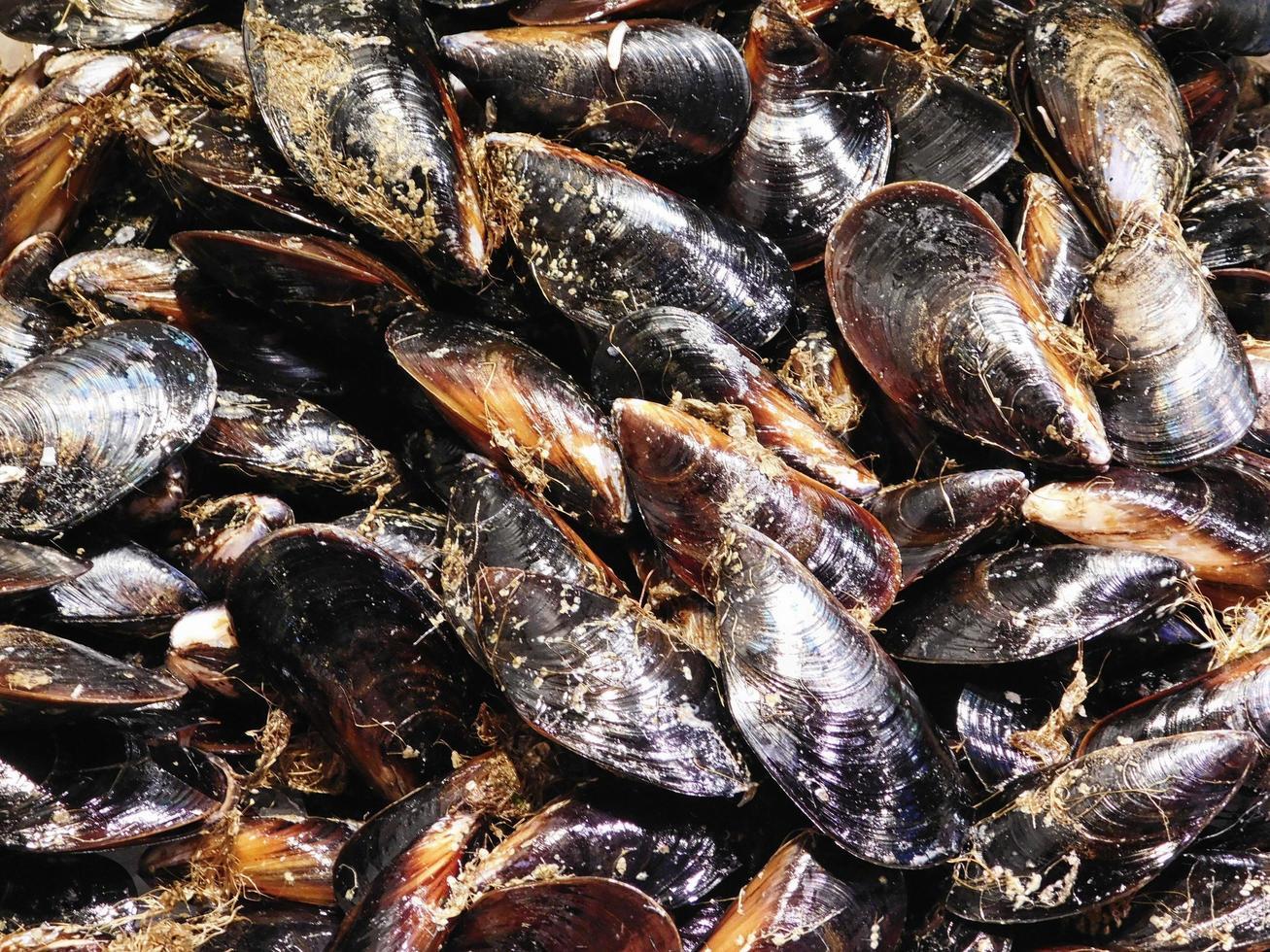 hög med musslor eller musslor foto