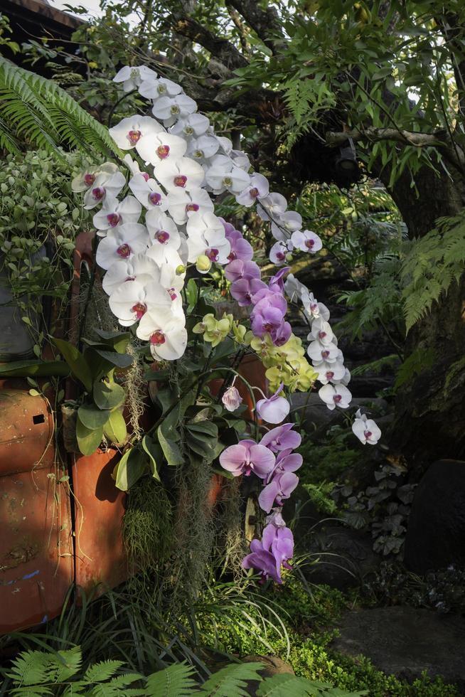 orkidéer i trädgården foto