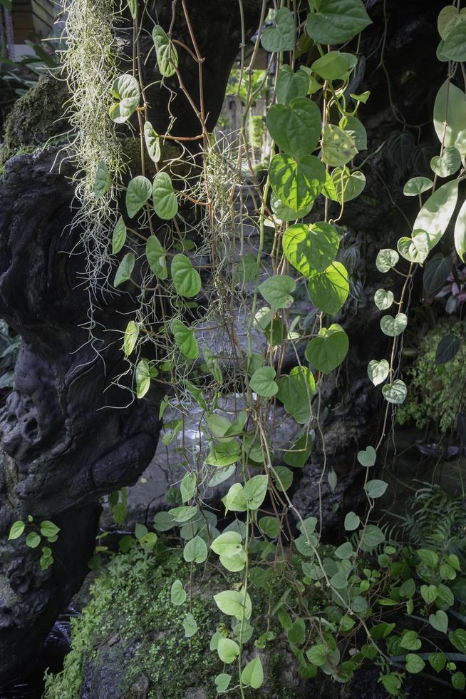 prydnadsväxt i trädgården foto