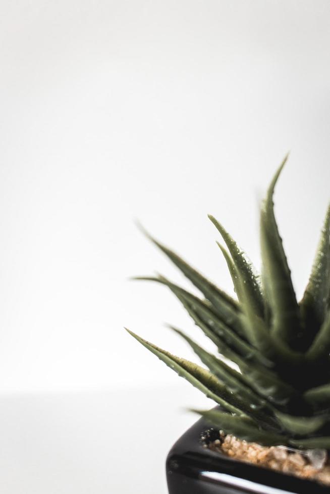 grön suckulent växt foto