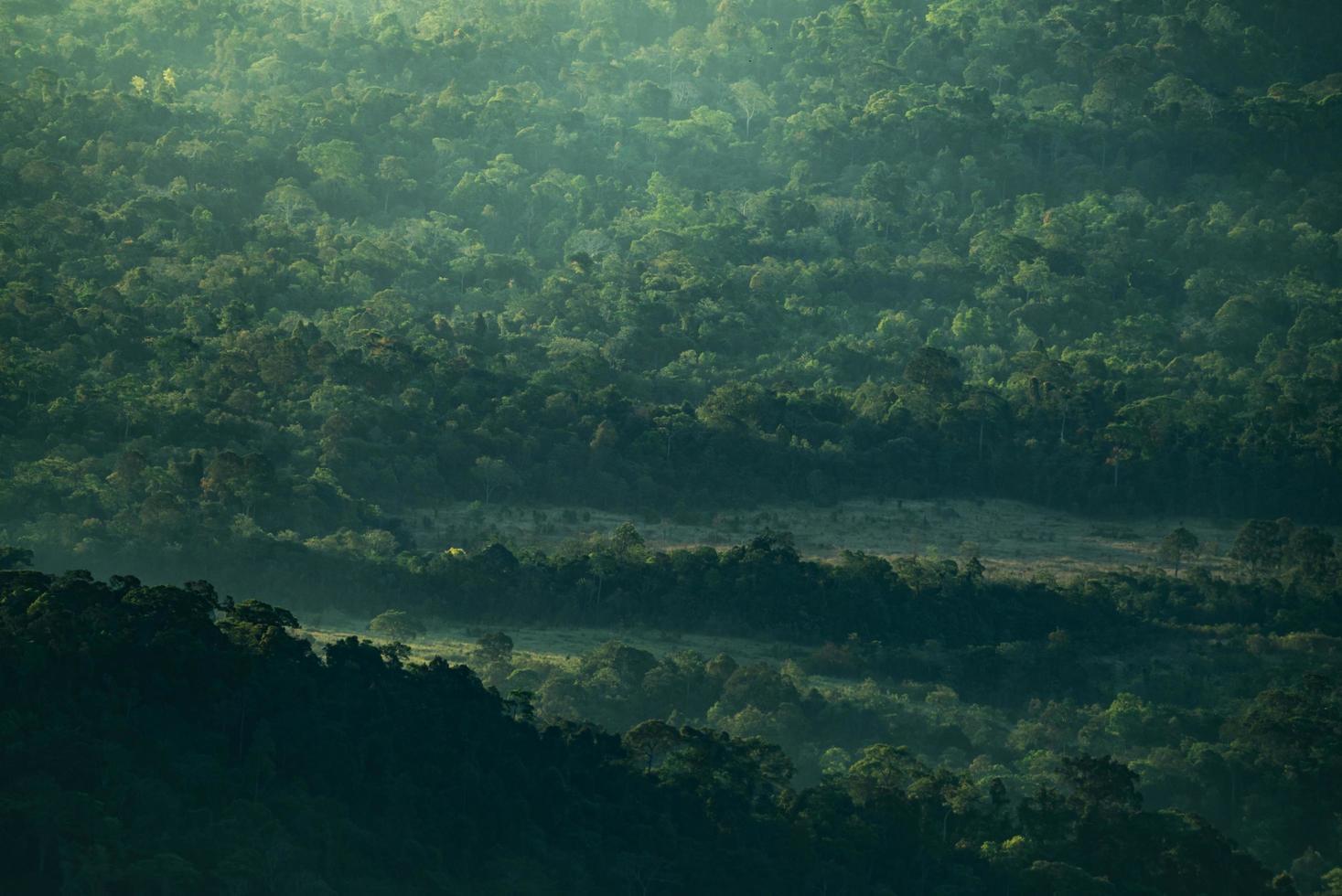 grön tropisk skog foto