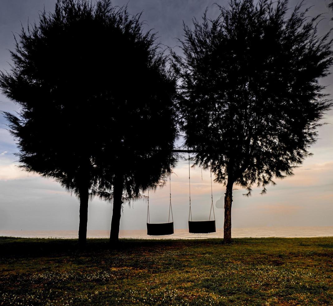 trä gungar under det stora trädet bredvid havet beach natur bakgrund foto