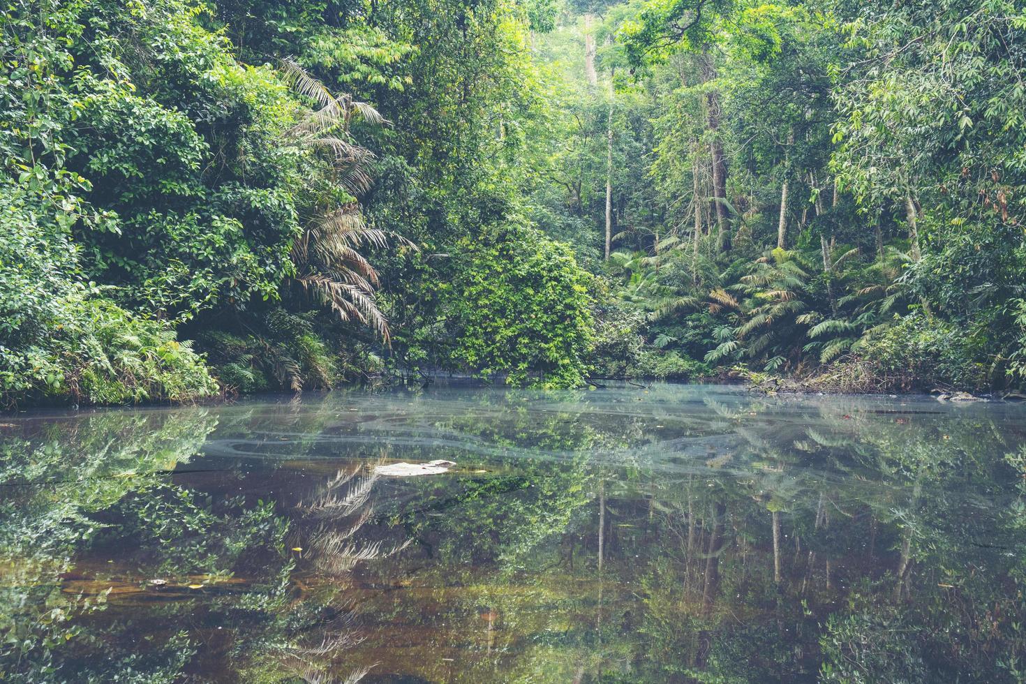 tropisk regnskog i Thailand foto