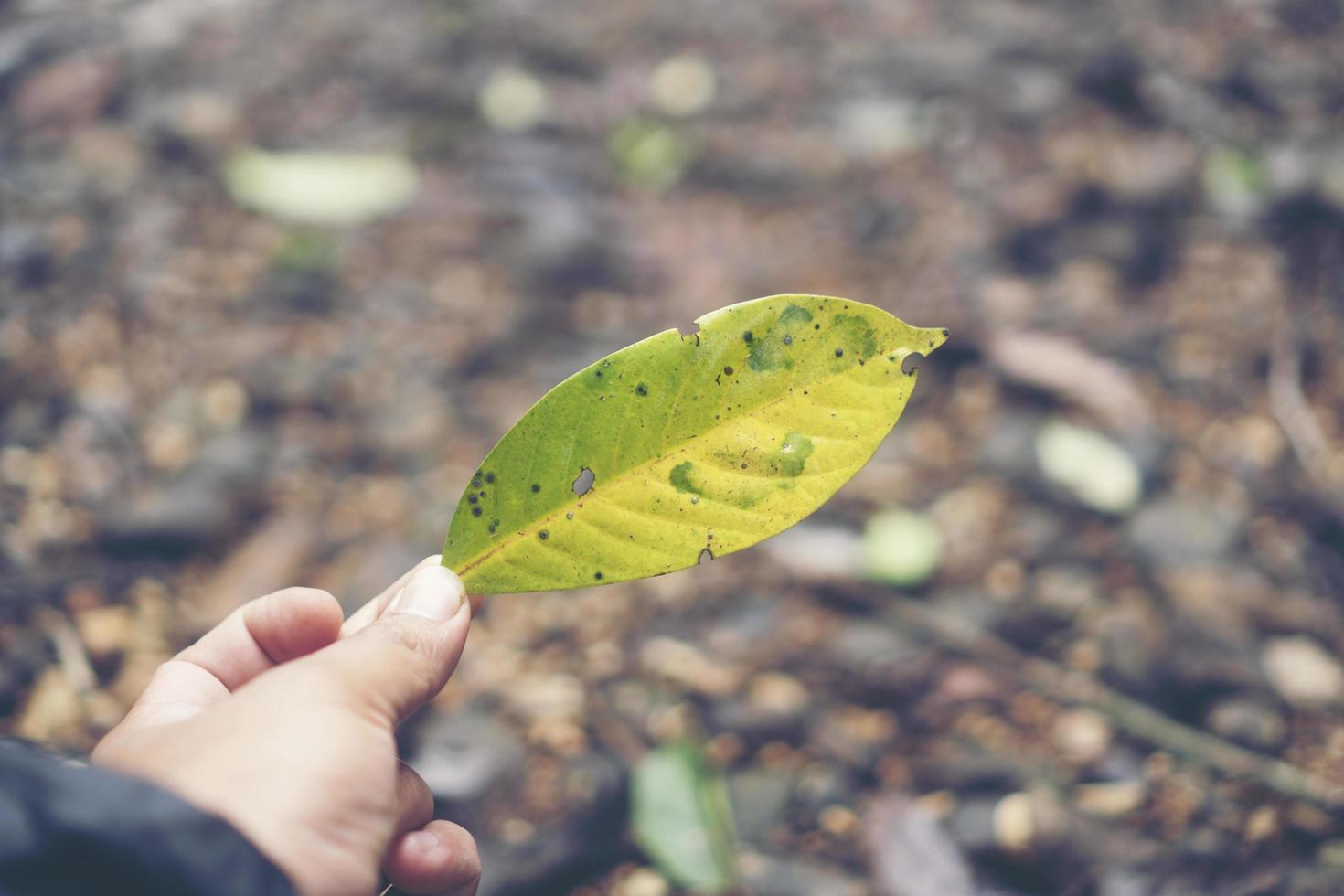 grönt blad i en hand foto