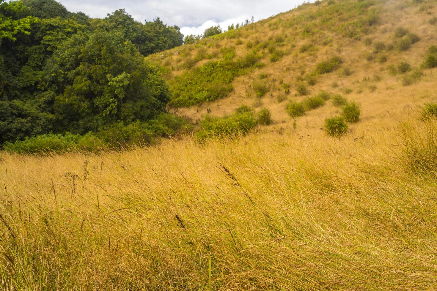 långt gräsfält foto