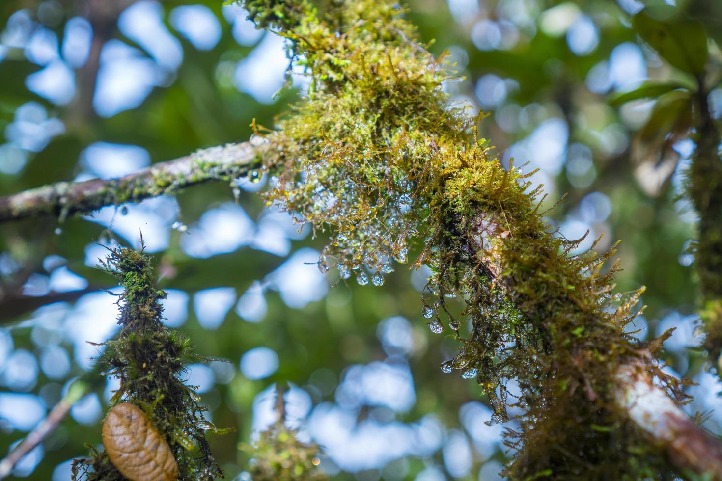 grön mossa på ett träd foto
