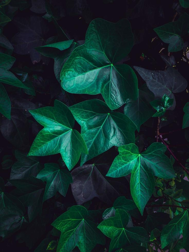 gröna växtsidor i en trädgård under vårsäsongen foto