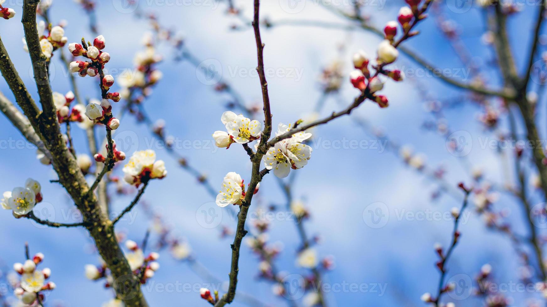 vårblommor på trädgrenar mot den blå himlen foto