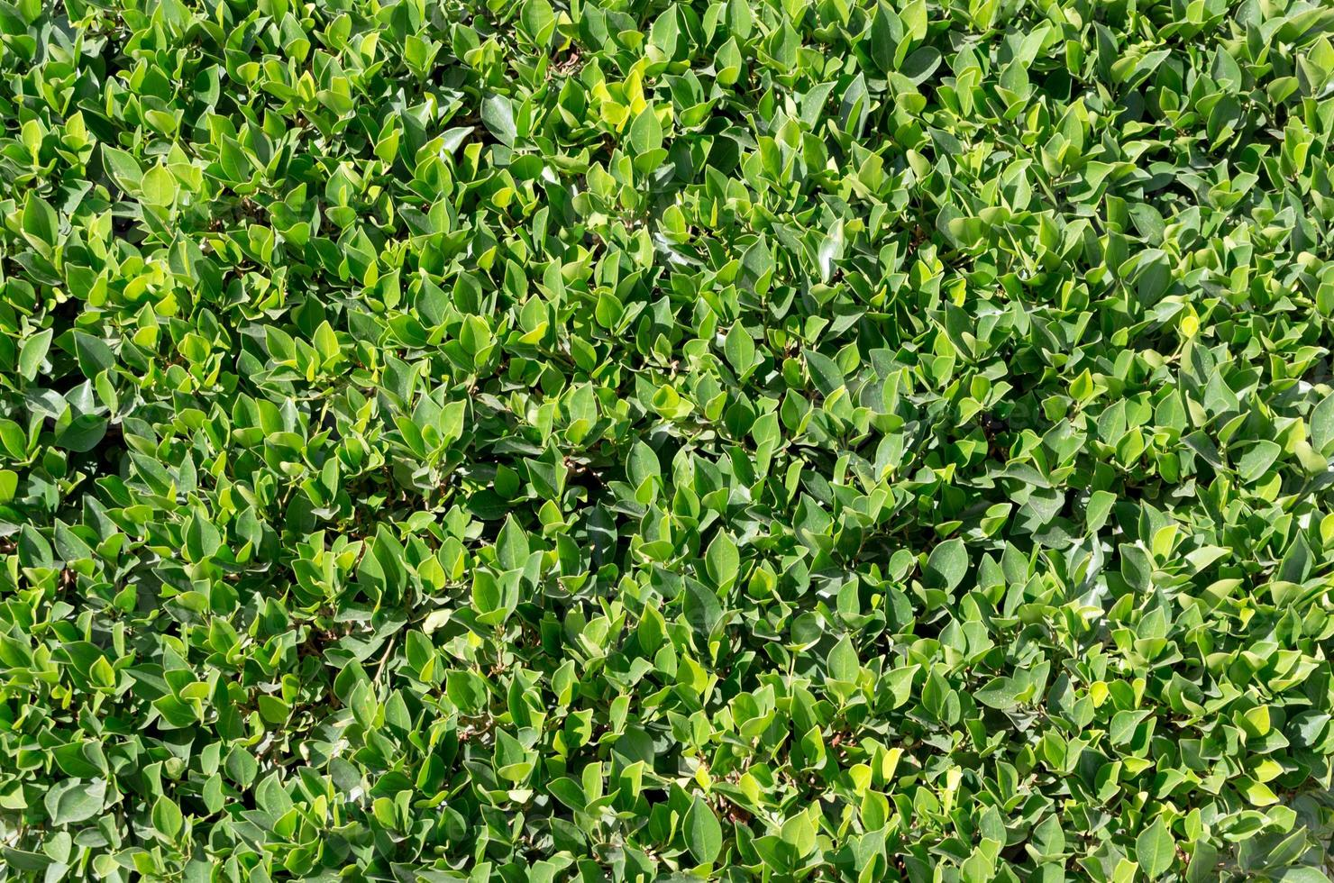 närbild av en grön buske foto