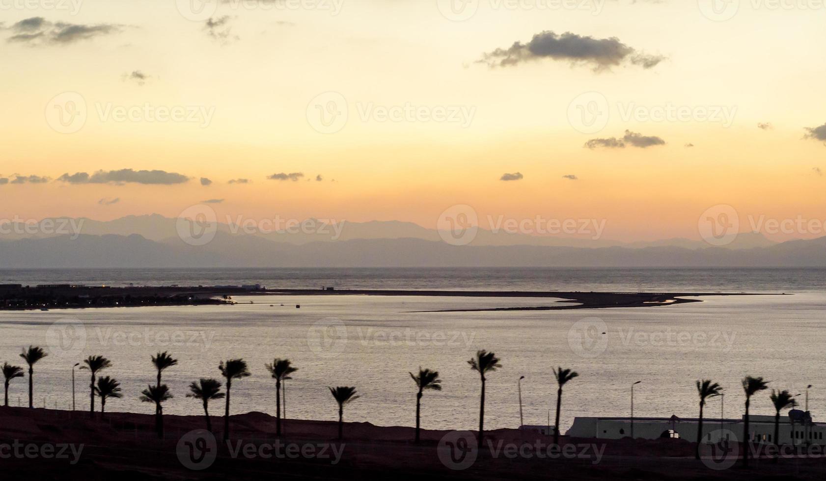 palmträdsilhuetter vid solnedgången foto