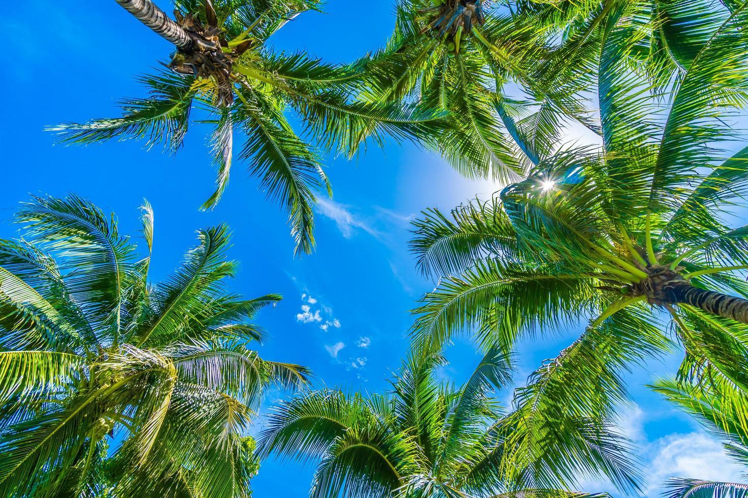 kokospalmer på blå himmel foto