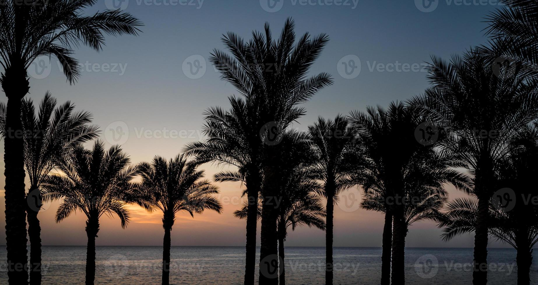 palmträd vid solnedgången foto
