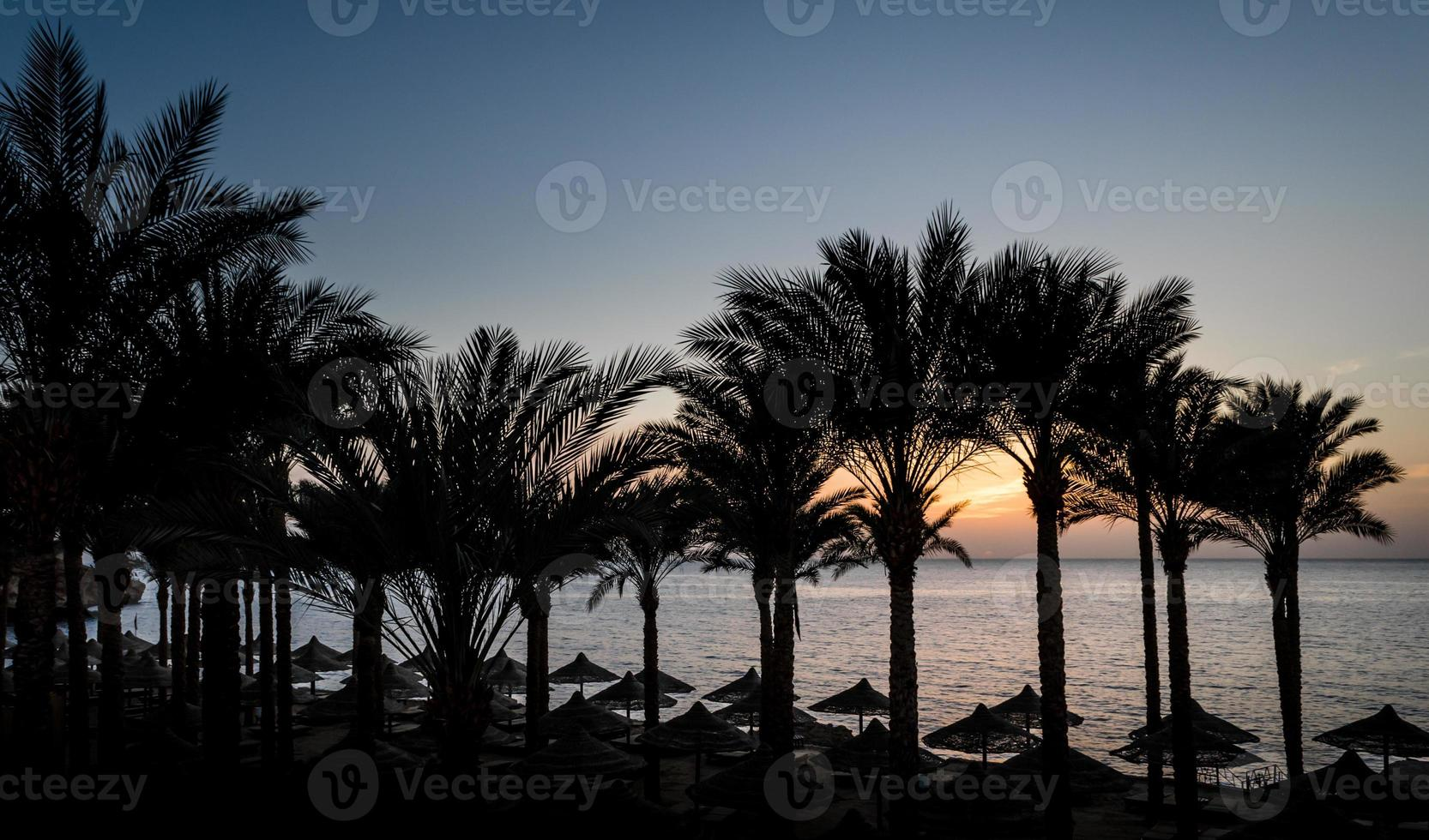 palmer och paraplyer vid solnedgången foto