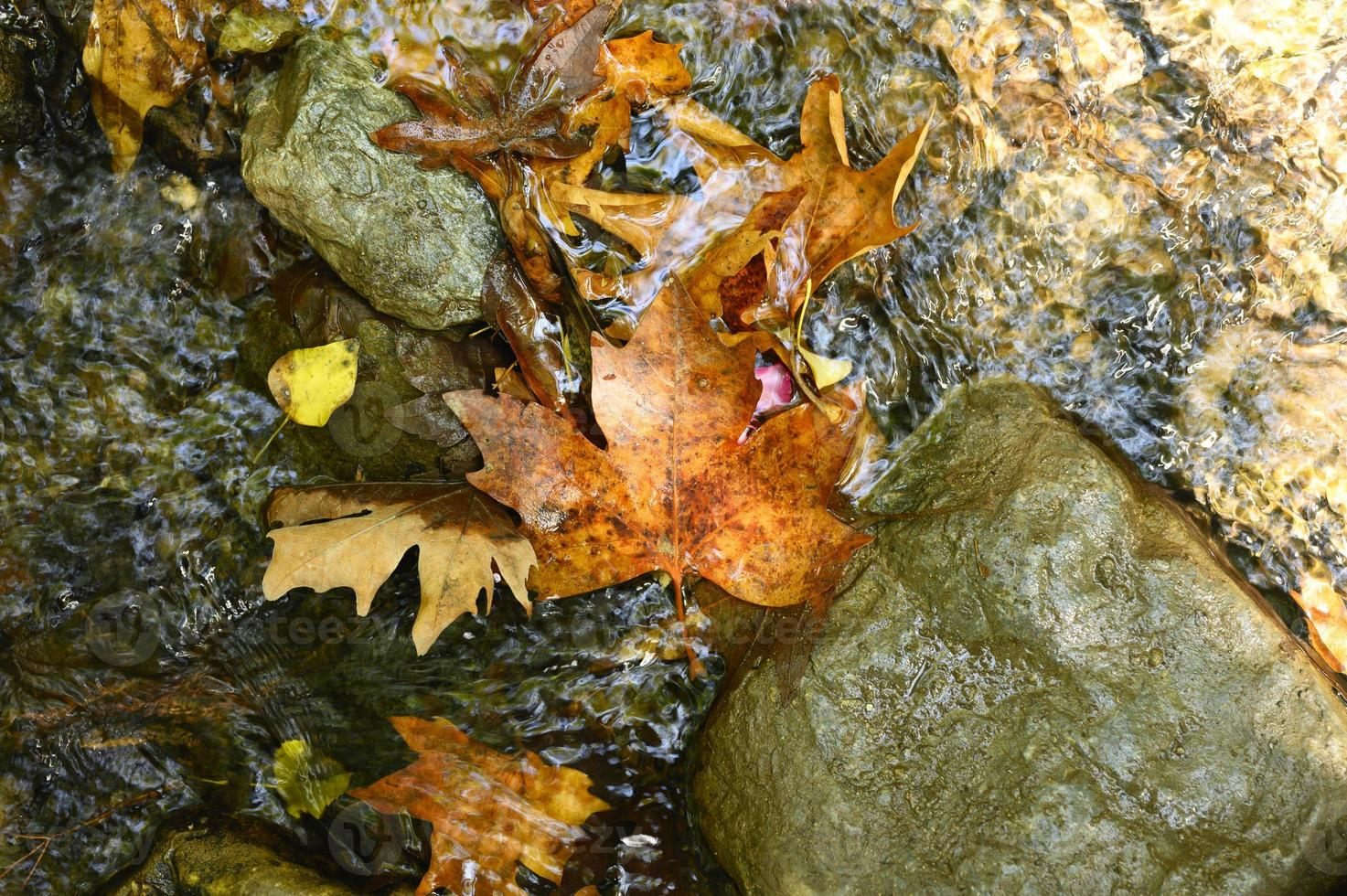 hög med våta fallna höstlönnlöv i vattnet och stenarna foto