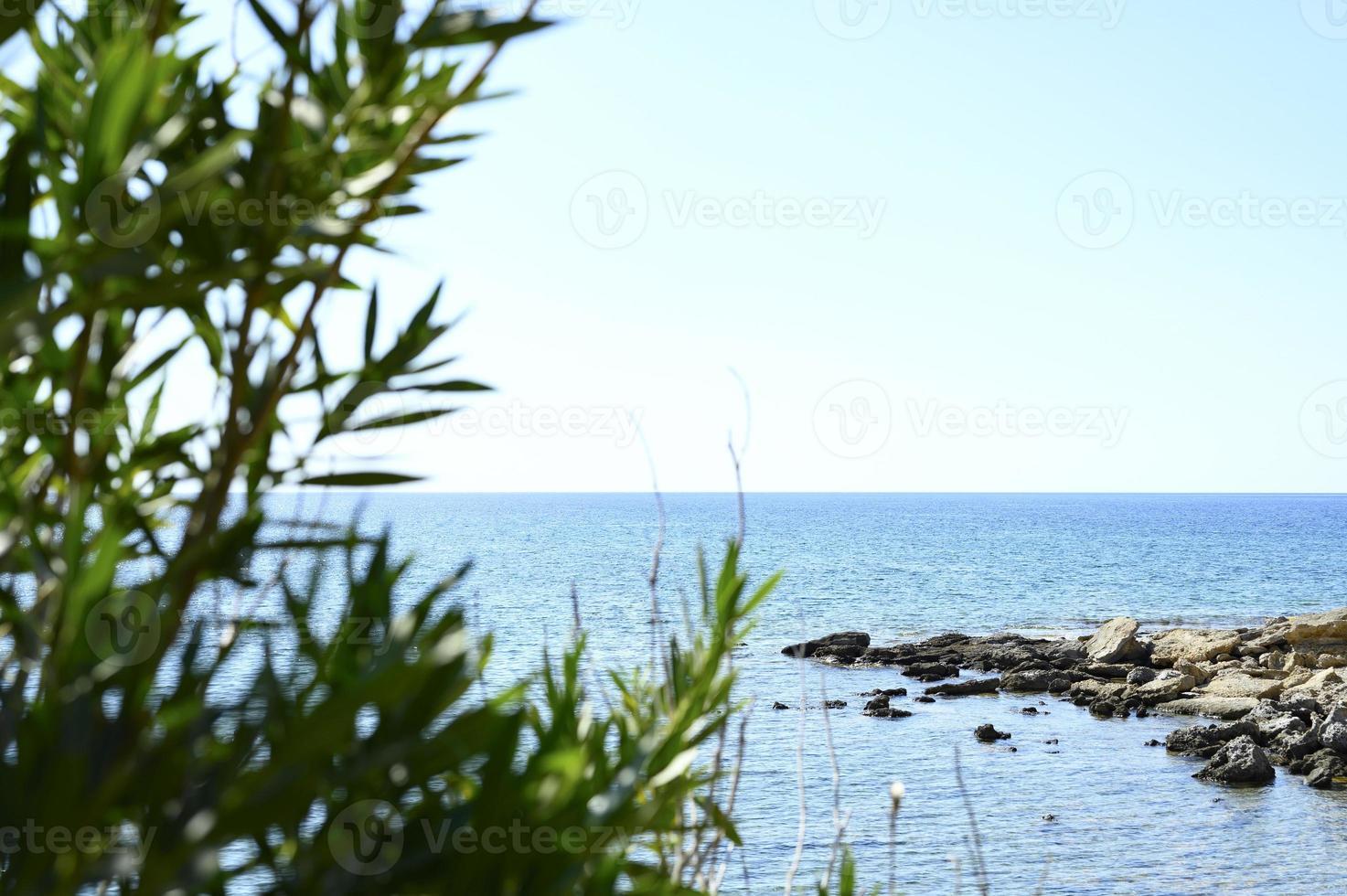 havsutsikt genom växter gren foto