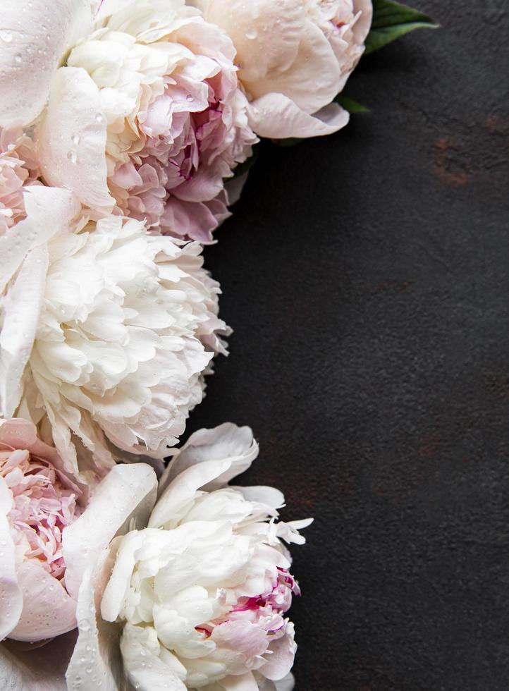 pion blommor på en svart betong bakgrund foto