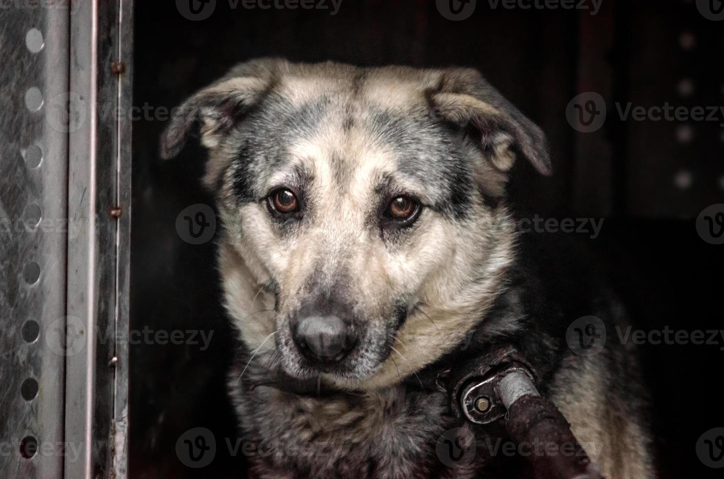 ledsen hund på en mörk bakgrund foto