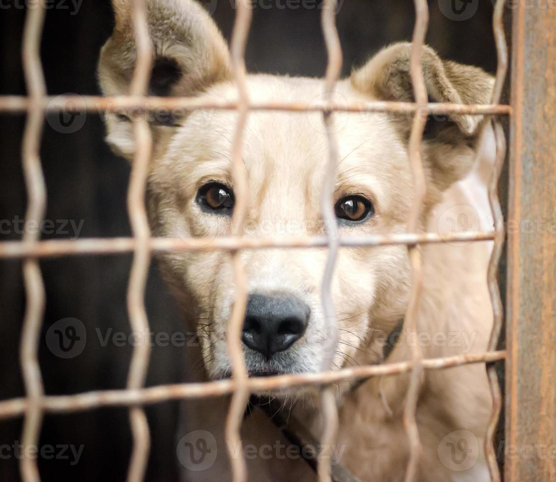vit hund bakom en bur foto