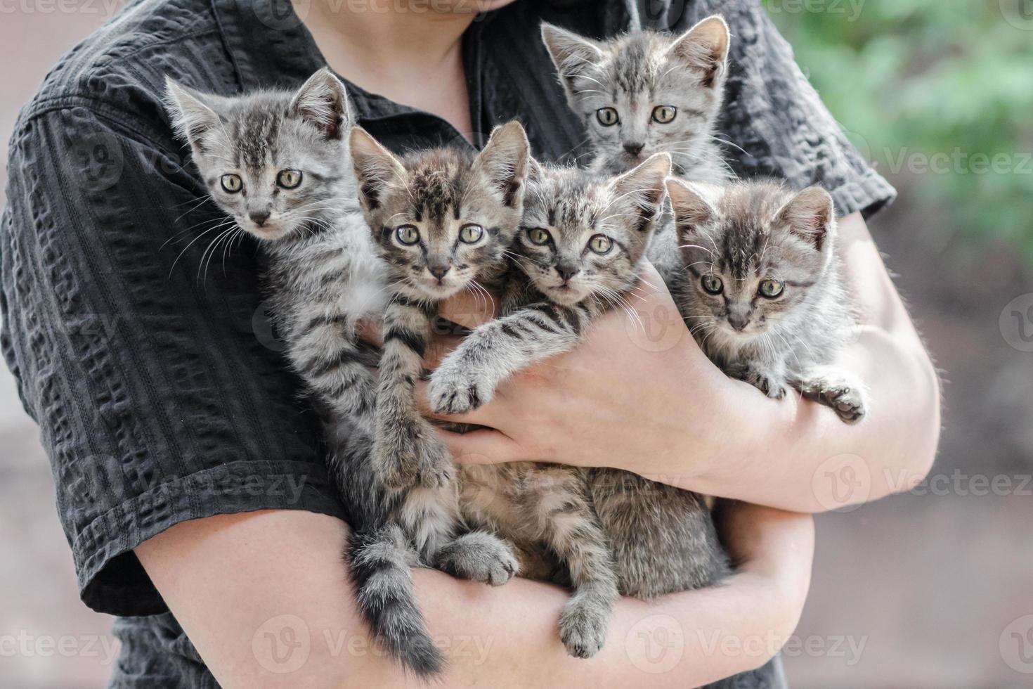 person som håller tabby kattungar foto