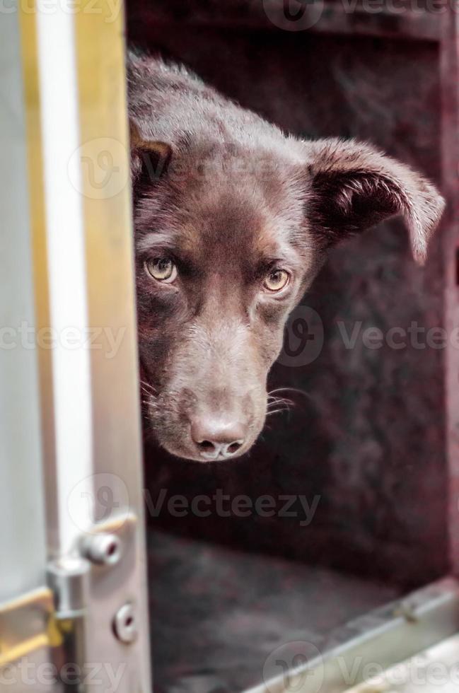 svart hund kikar runt hörnet foto