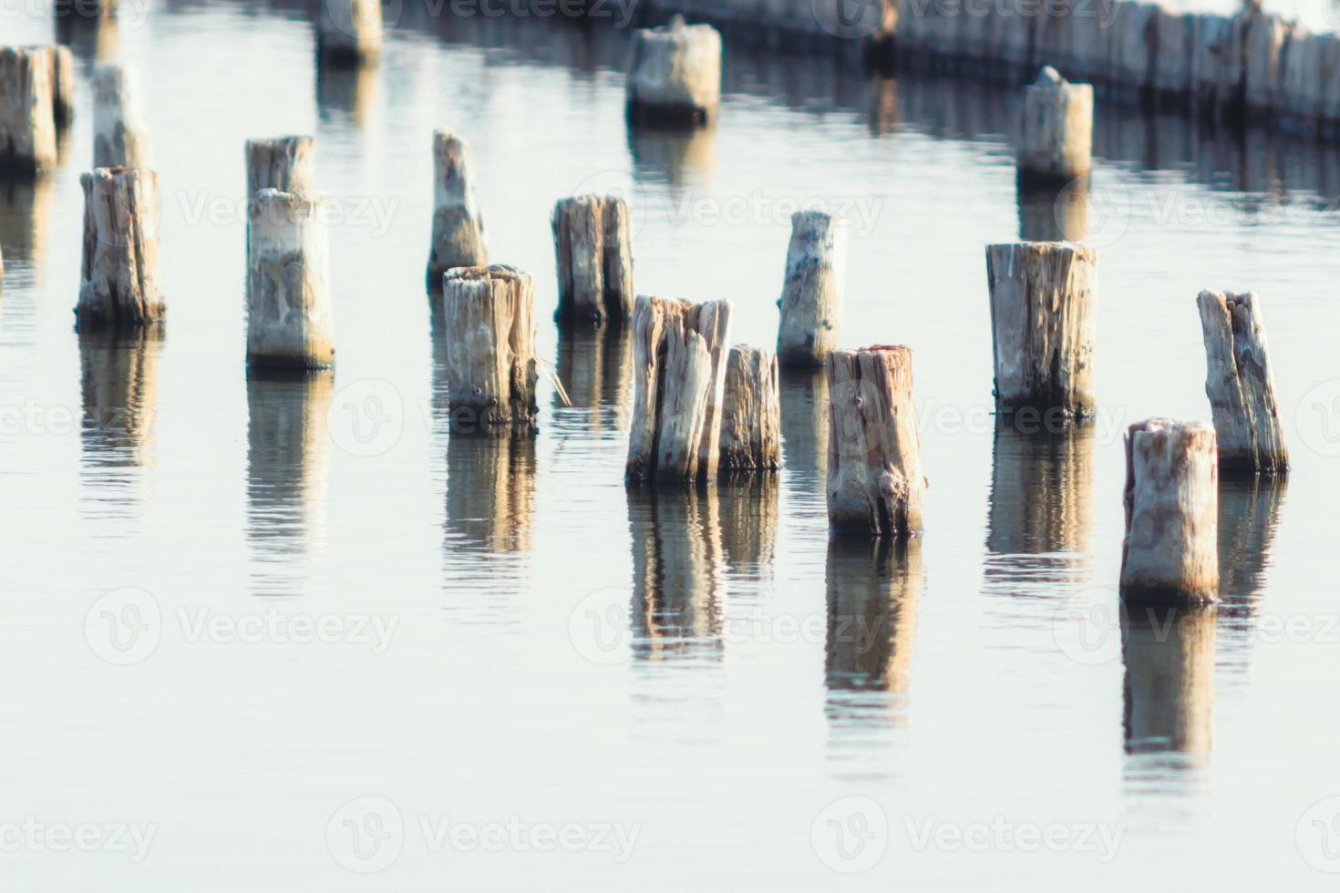 massa trästolpar i vatten foto