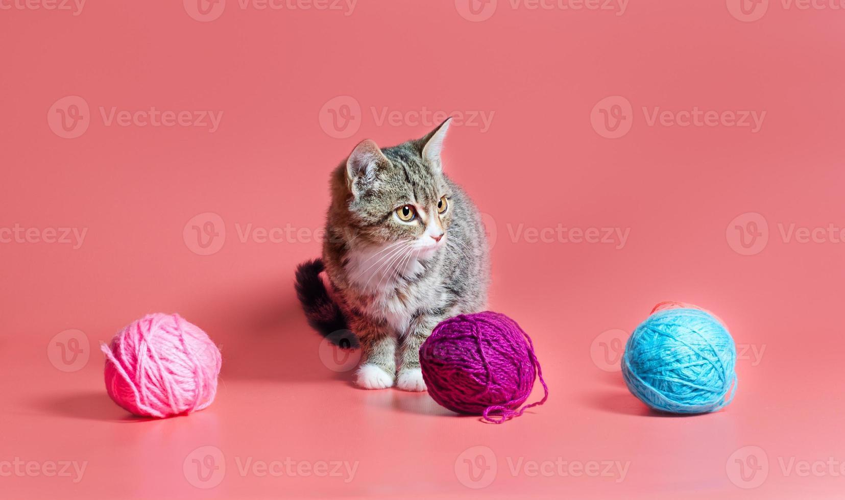 katt med garn foto