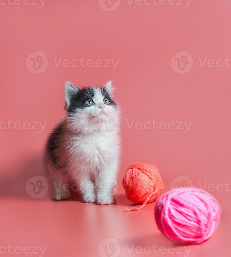 svartvit katt med garn på en rosa bakgrund foto