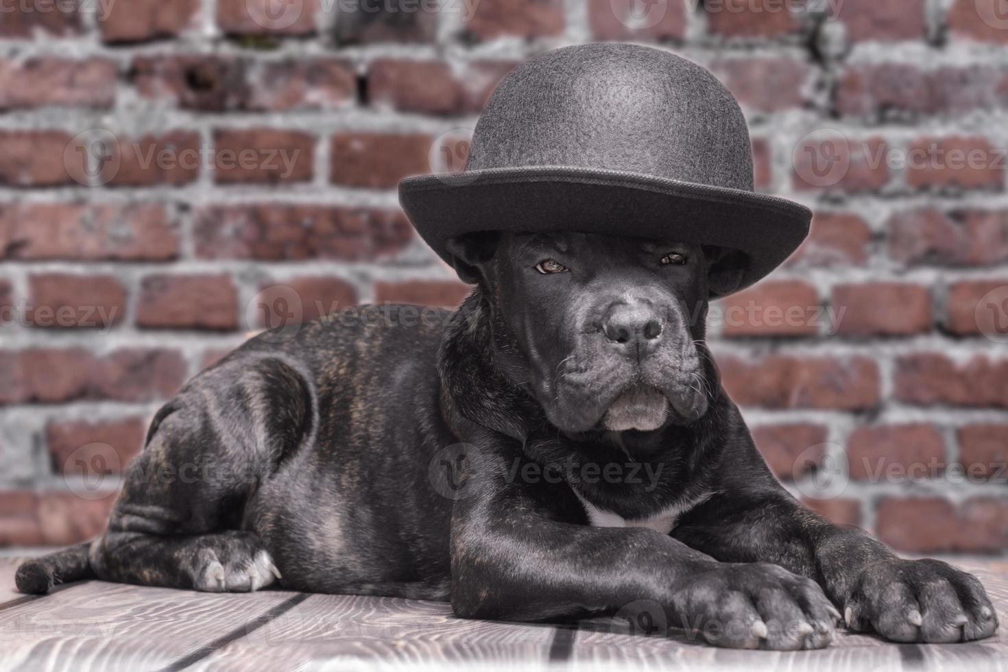 svart valp i en bowler hatt foto