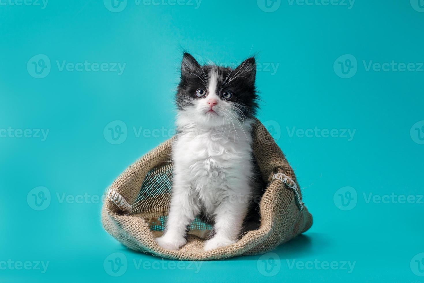 svartvit kattunge foto