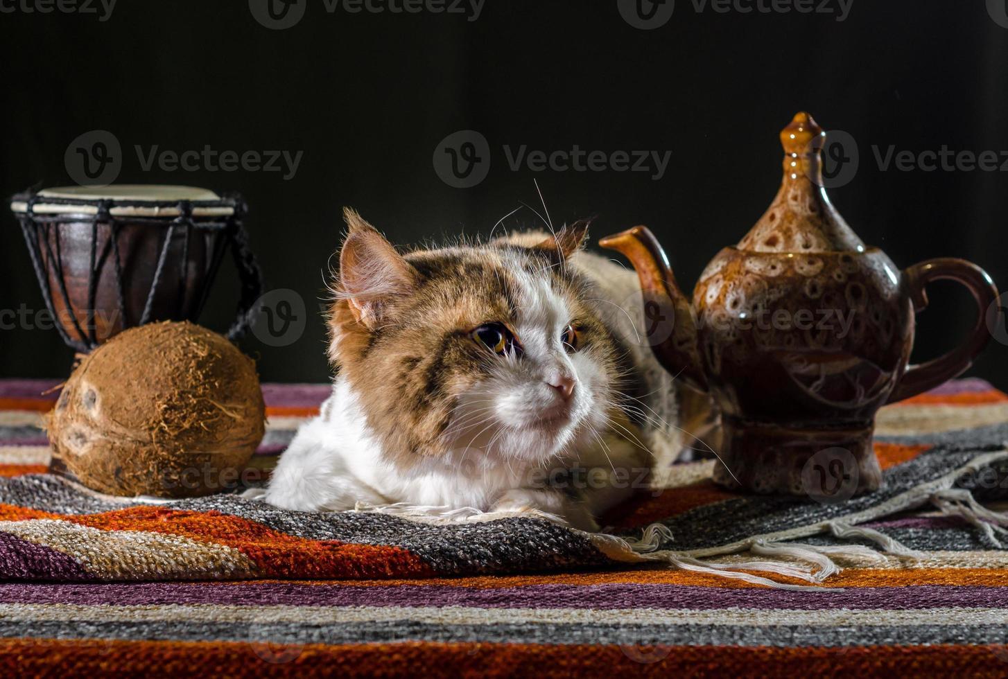 katt med tekanna och bröd foto