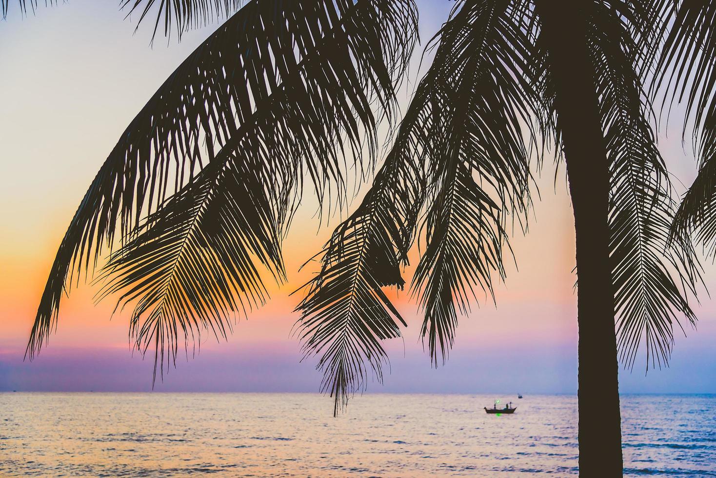 silhuett av en palm foto